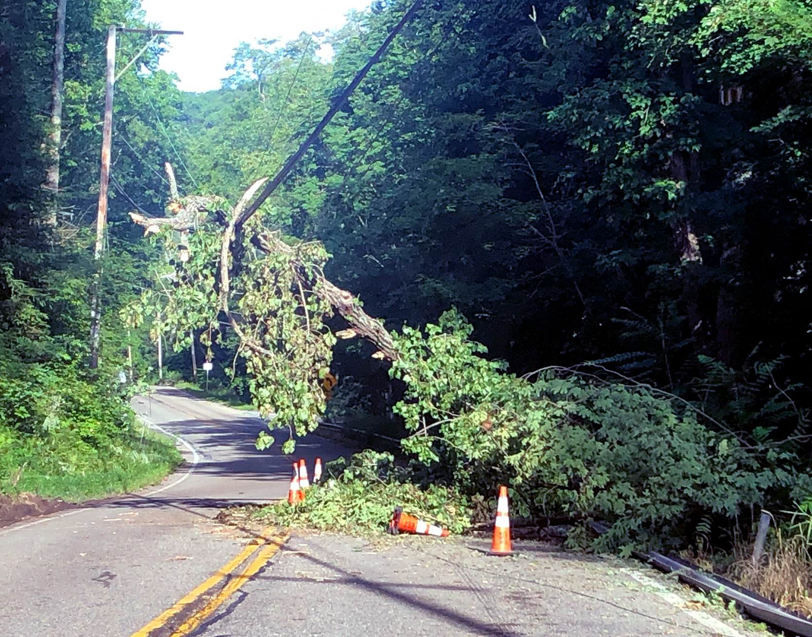 A large tree leans precariously on a powerline over Route 301 near CloudVisit's Hudson Valley offices