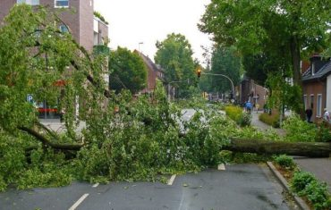 Fallen tree across the road downtown.